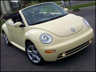 beetle_04